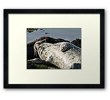 """This Is The Life"" ! Framed Print"