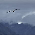 Out of the Cuillin by Maureen Anderson