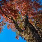 Colorful Tree by LudaNayvelt