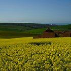 Ruin in a field of rapeseed by glynk