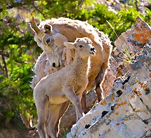 Motherly love by Luann wilslef