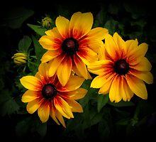 Summer Beauty by katpix