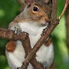 "My name is ""Feisty"" and I'm a nut-a-holic !  by Bine"