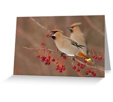 Bohemian Waxwings Greeting Card