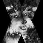 X Marks The Dog by Jodie Bennett