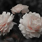 Roses in Three Selective Color Fine Art Photograph by Michelle Joseph-Long