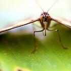 Butterfly by CJ B