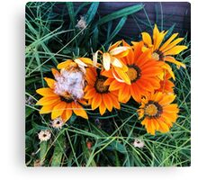 Nothing but bloom Canvas Print