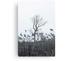 Lone Tree With Reeds In A Field Canvas Print