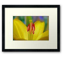 Macro Lily Framed Print