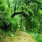 Nature 2 by Dr. Harmeet Singh