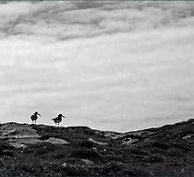 Oystercatchers, Barra by Maureen Anderson