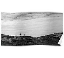 Oystercatchers, Barra Poster