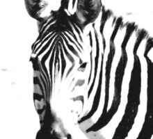 Zebra close up black & white by Valerija S.  Vlasov