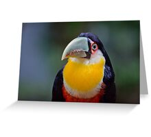 Red Breasted Toucan Greeting Card