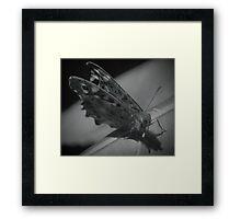 British Moth Framed Print