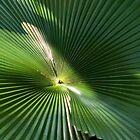 Radial Charm (Licuala Cordata Palm ~ leaf centre) by Kerryn Madsen-Pietsch