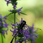 Dragonfly at Dusk by T.J. Martin