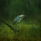 Feeding in the Back Waters by swaby