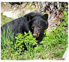 Mom Black Bear Poster