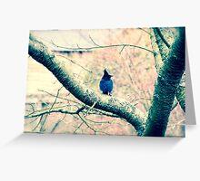 Blue Jays II Greeting Card