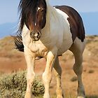 Paint Mustang in McCullough Peaks Wilderness by cavaroc