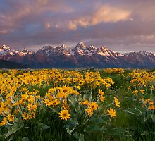 Wildflowers and Tetons at Sunrise by cavaroc