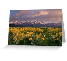 Wildflowers and Tetons at Sunrise Greeting Card