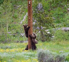 Grizzly Bear Cubs on Pole by cavaroc