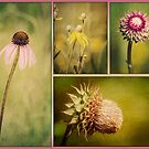 Wildflowers by KBritt