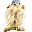 Portrait of Kestrel Chick by Colin Shepherd