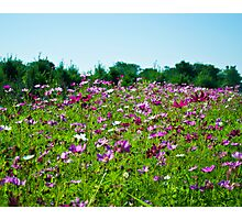 Field of Color Photographic Print