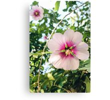 Flowers go bloom Canvas Print