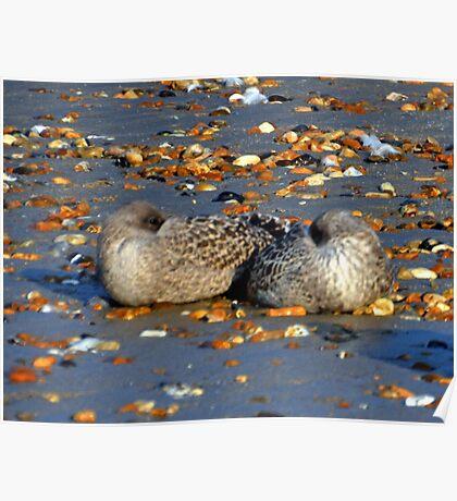 Sleepy-time  Gulls Poster