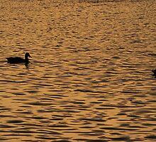 Line up the ducks by Kasia Nowak