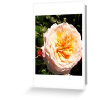 Governor General's Roses  #15 Greeting Card