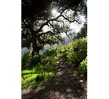 Mystical Tree Photographic Print