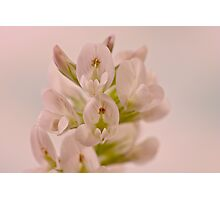 White Wild Flower Photographic Print