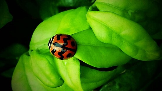 ladybird 3 by domolitos