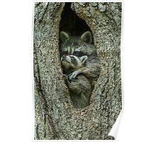 Raccoon Hug Poster