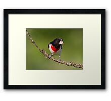 Rose-breasted Grosbeak Framed Print