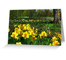 Dadffodil garden Greeting Card