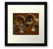 Rams Butting Heads Framed Print