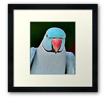 Darth Parrot Framed Print