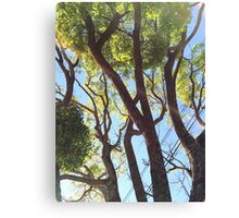 Good morning, trees! Canvas Print