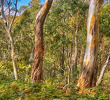 Survivors - Coolah Tops National Park - The HDR Experience by Philip Johnson