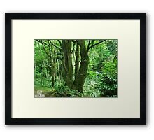 The Old Lady Tree Framed Print