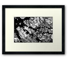 tree reflection Framed Print