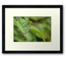 Drops on a leaf Framed Print