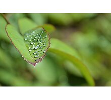 Drops on a leaf Photographic Print